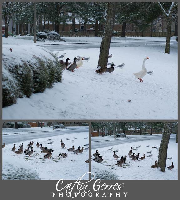 Snow+Photo+Walk-36_LPT.jpg