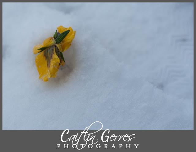 Snow+Photo+Walk-43_LPT.jpg