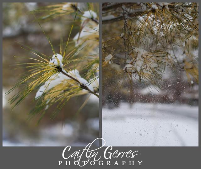 Snow+Photo+Walk-26_LPT.jpg