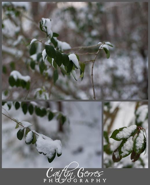 Snow+Photo+Walk-19_LPT.jpg