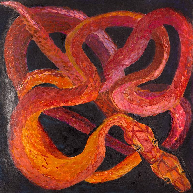 Snakes_01.jpg