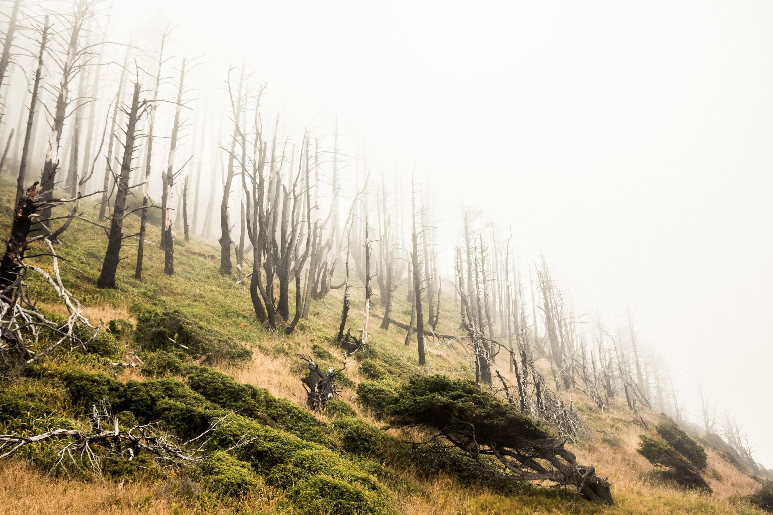 CA-LostCoast-FoggyDeadTrees.jpg