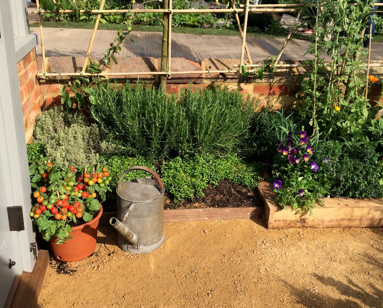 Herbs and cherry tomatoes