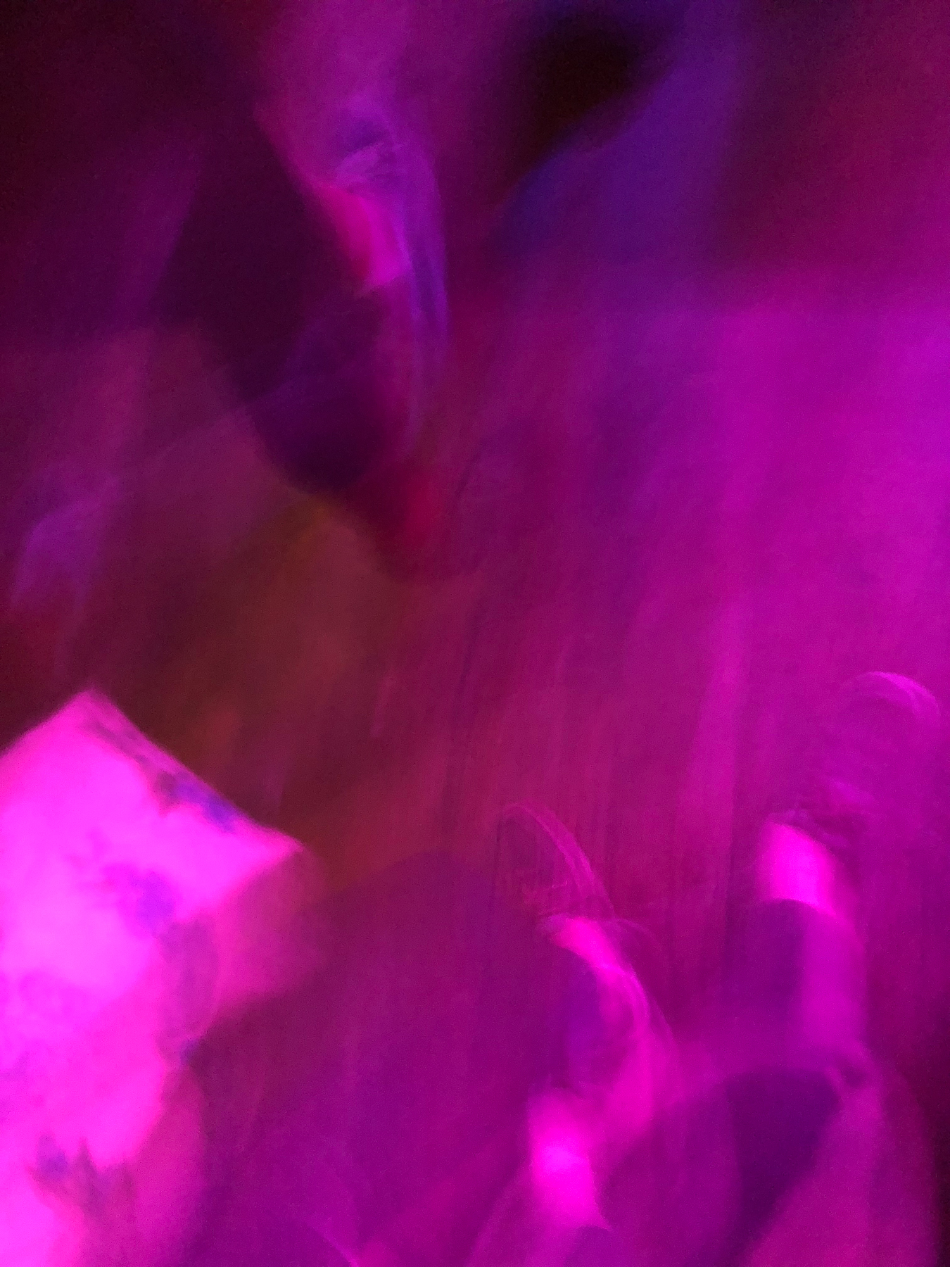 CrestedButte-Vinotok-065.jpg