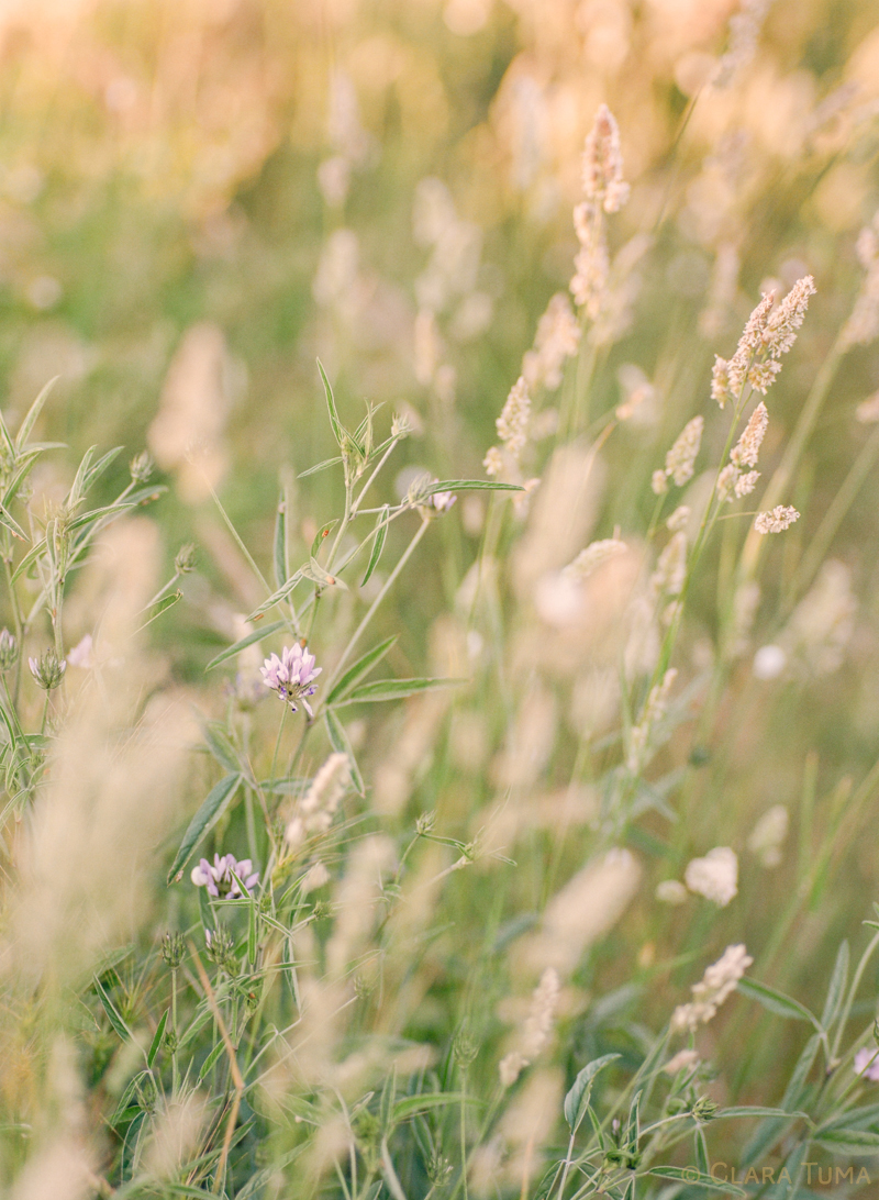Provence-Grass_©Clara-Tuma_01.jpg