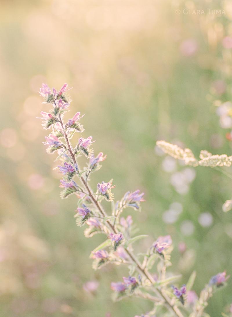 Provence-Grass_©Clara-Tuma_02.jpg