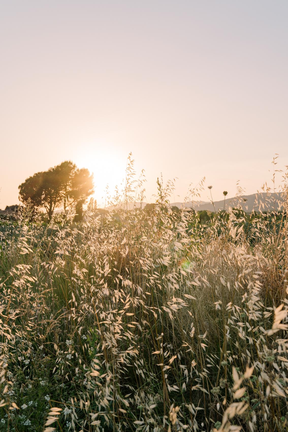 TRAVEL-Photography-provence-landscape-nature-luberon-Clara-Tuma.jpg