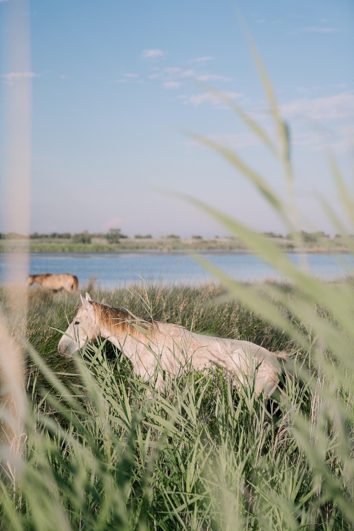 TRAVEL-Photography-provence-wild-horses-nature-camargue-Clara-Tuma.jpg
