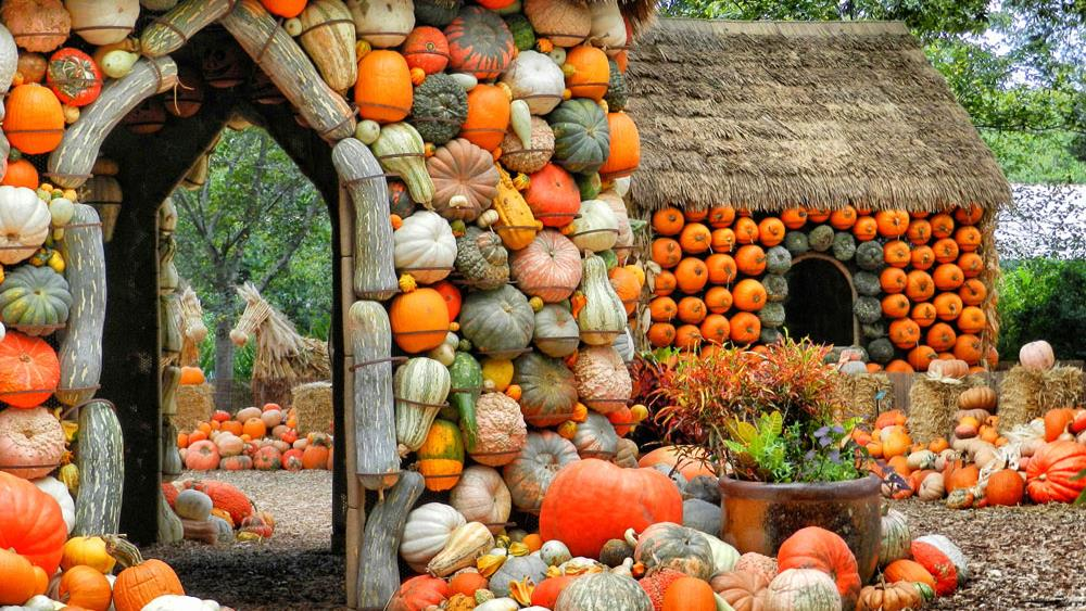 Dallas Arboretum's Pumpkin Patch