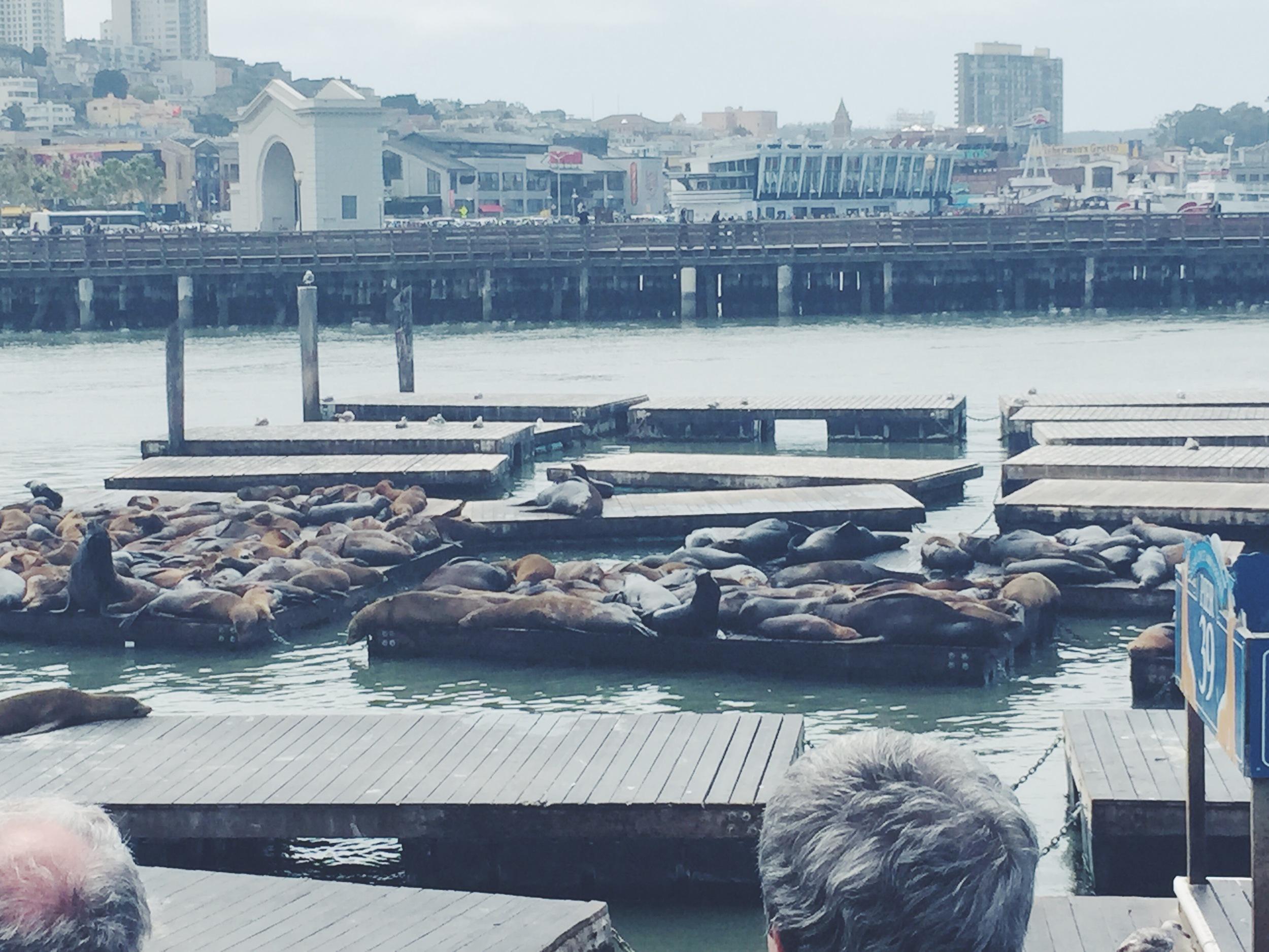 Pier 39 - Sea Lions on Docks