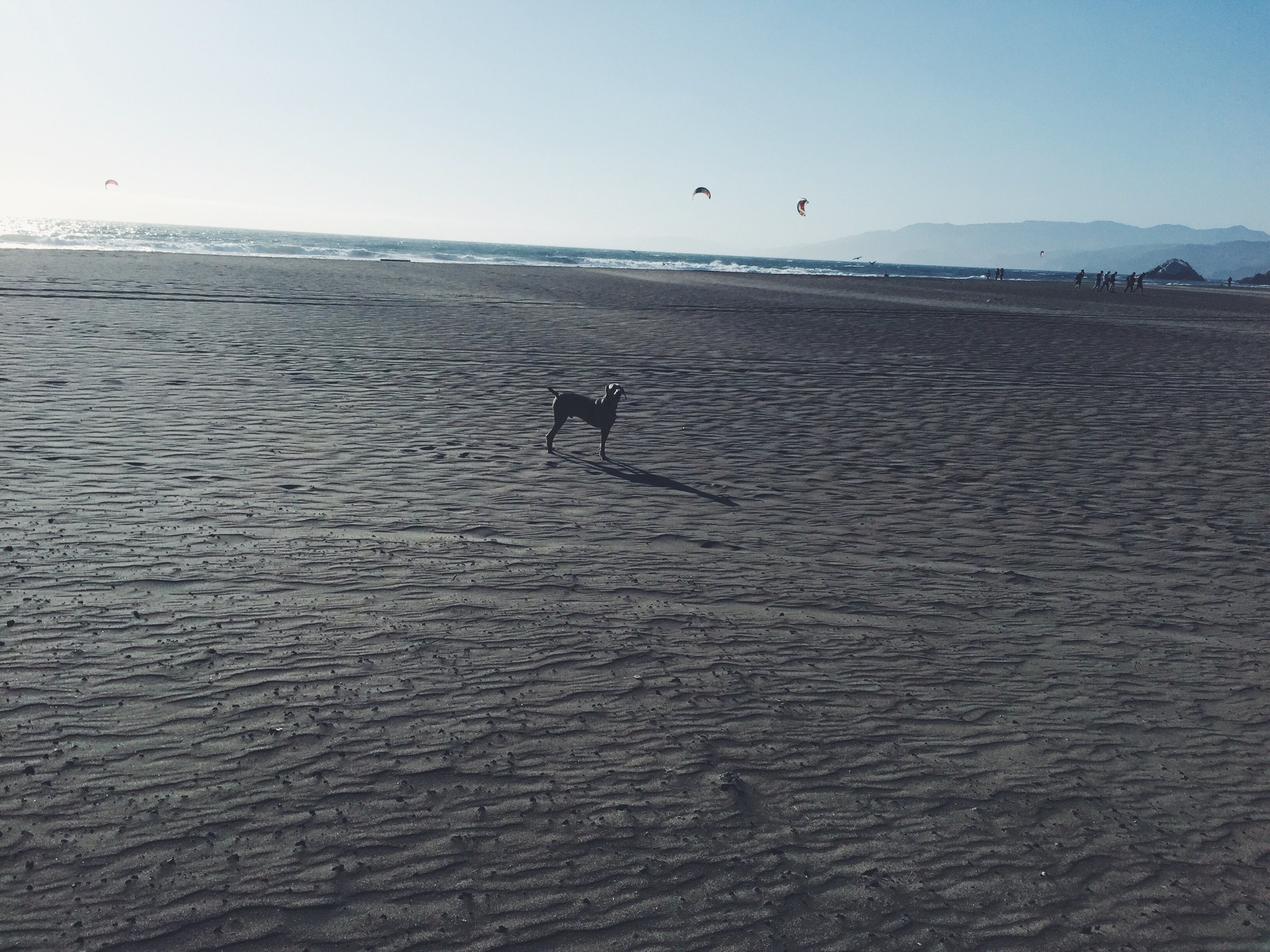 Ocean Beach - Riley 2