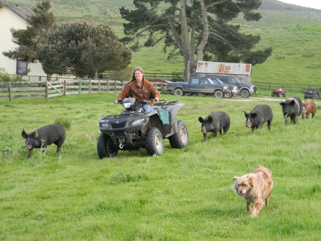 doni moving pigs.jpg