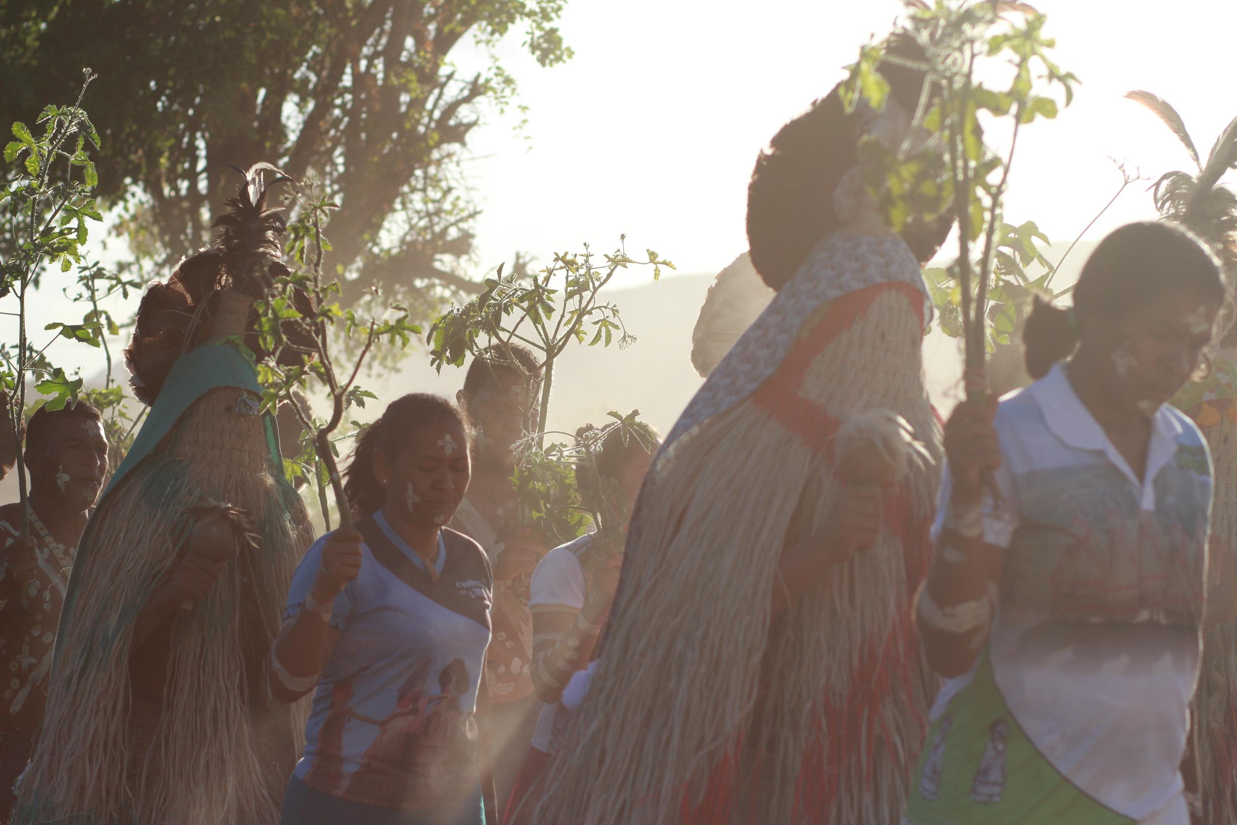 Corrida do Umbu:Ritual Pankararu que celebra o início da safra do fruto