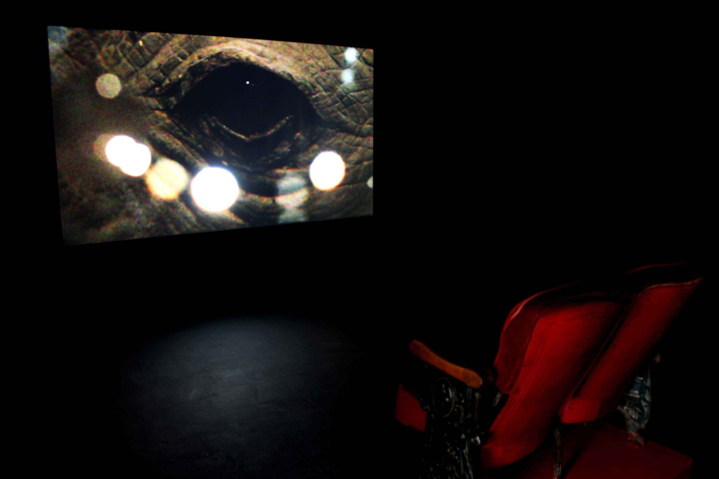 Showing Seeing,  installation view, 2014