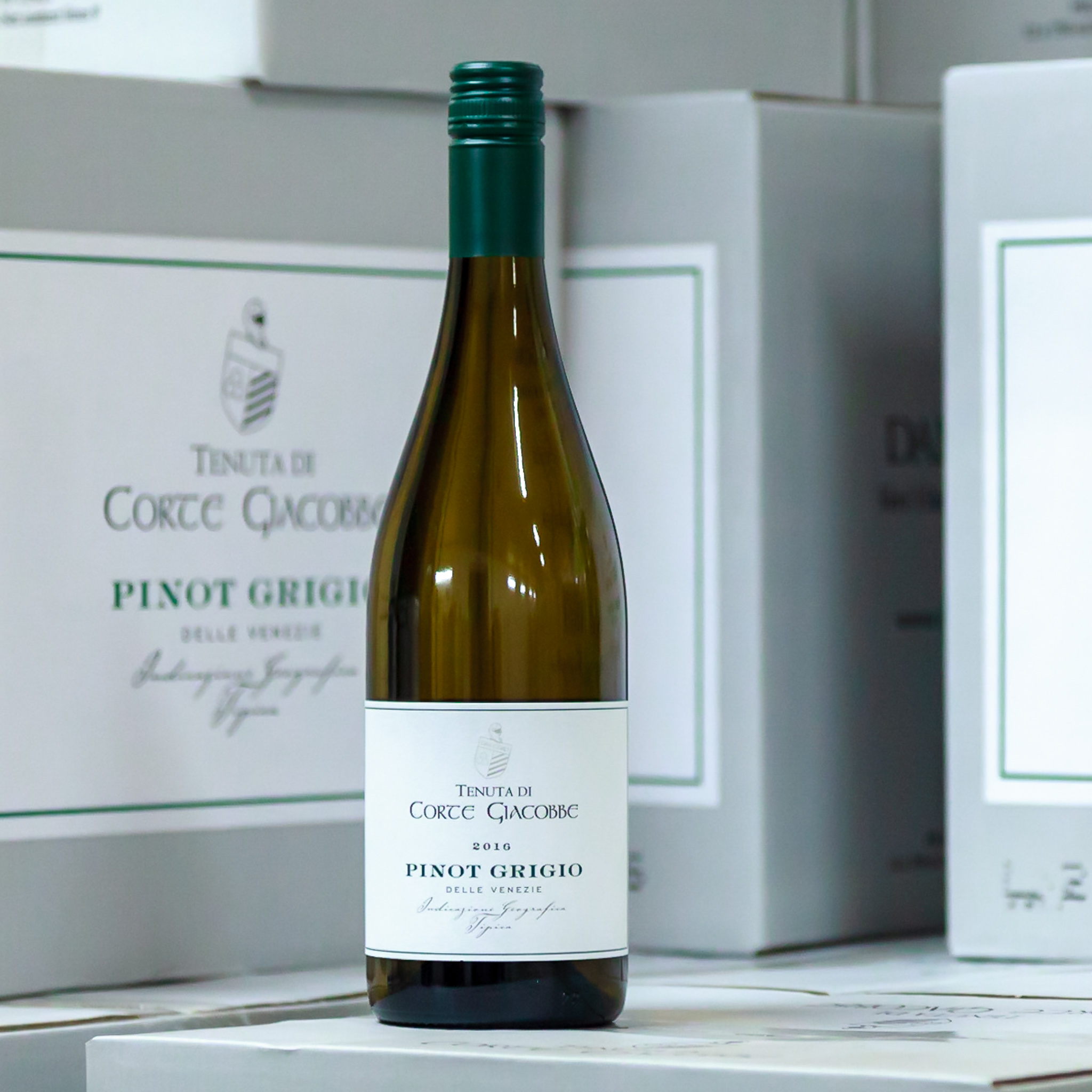 Pinot Grigio - Víno slámovité barvy se zelenými odlesky. Aroma svěžího ovoce, zralé hrušky a banánu. Vyvážená kyselinka a minerálnost podtrhují osobitost tohoto vína.