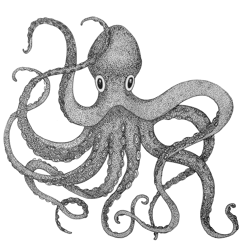 "5"" x 5"" - Octopus"