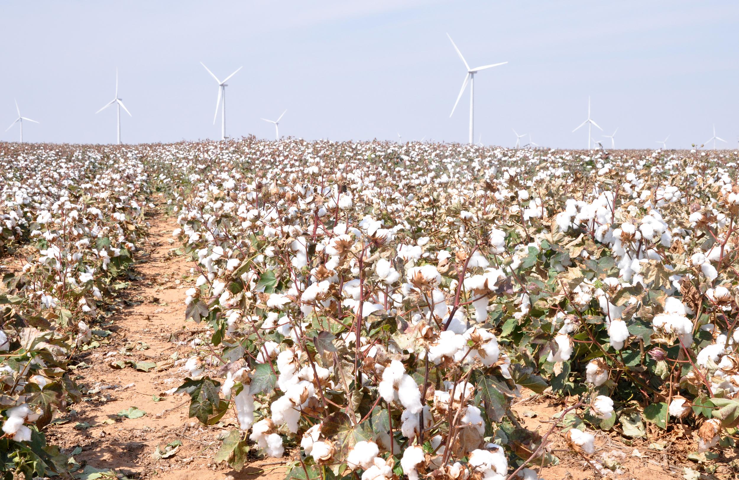 1 cotton, wind turbine (7) adj.jpg