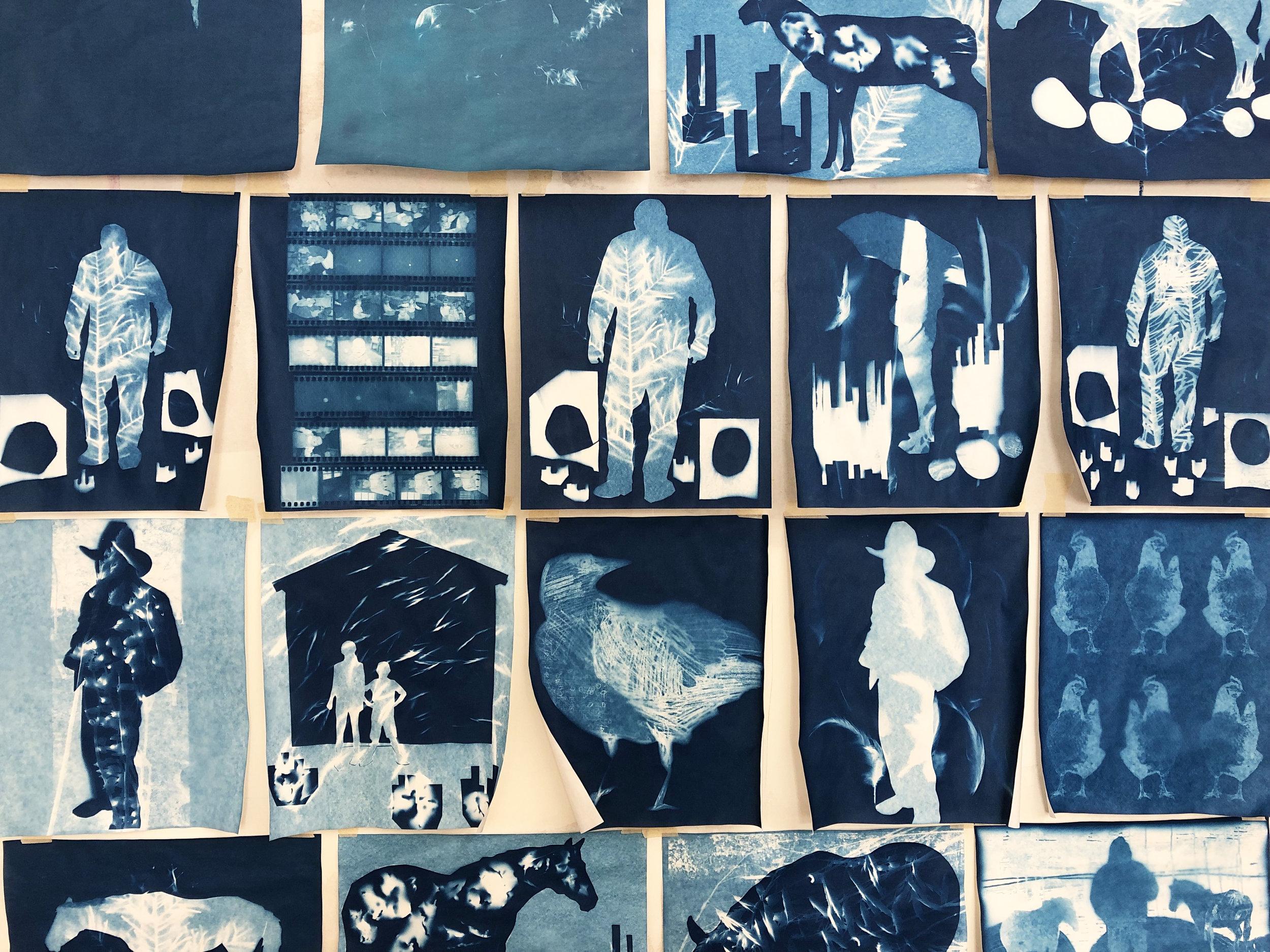 cyanotype art sun prints