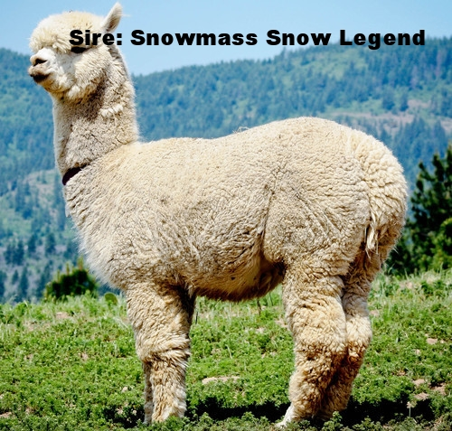 snowmass snow legend.jpg
