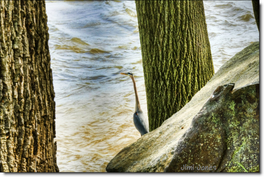 Egret on the Lookout