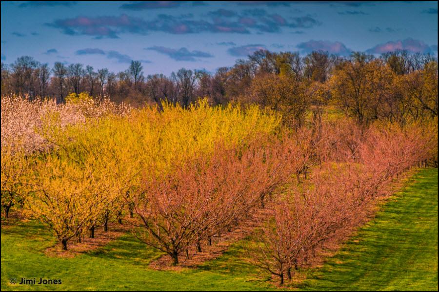 Tree Farm in Spring