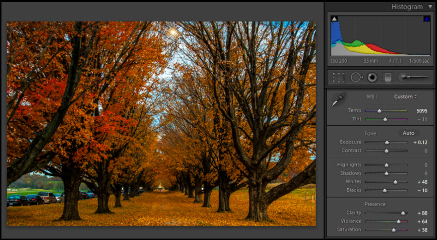 Colorful Row of Trees - LR4 Adjustments