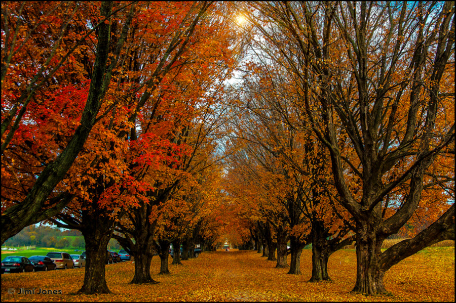 A Colorful Row of Trees