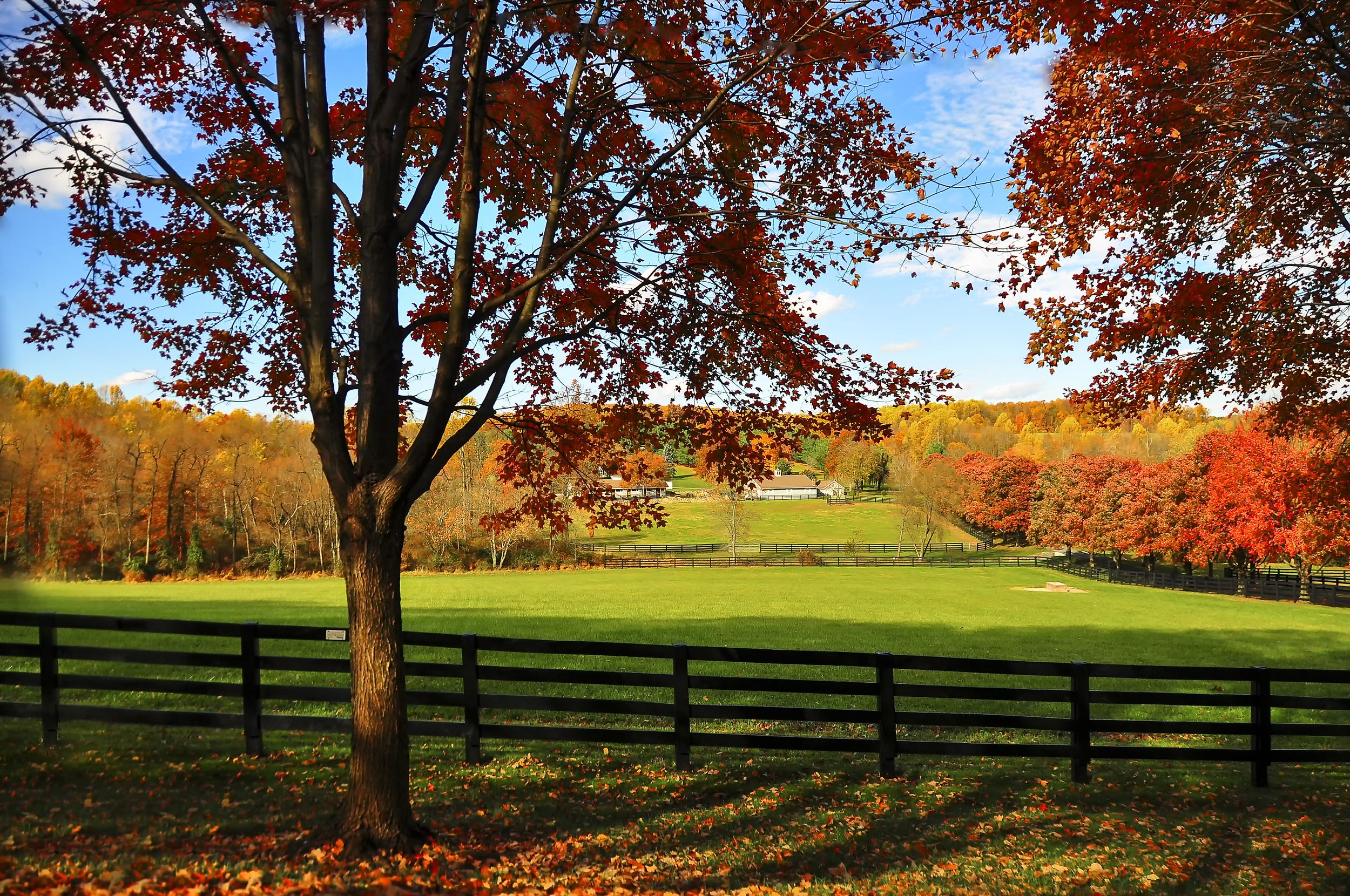 The Pasture.jpg