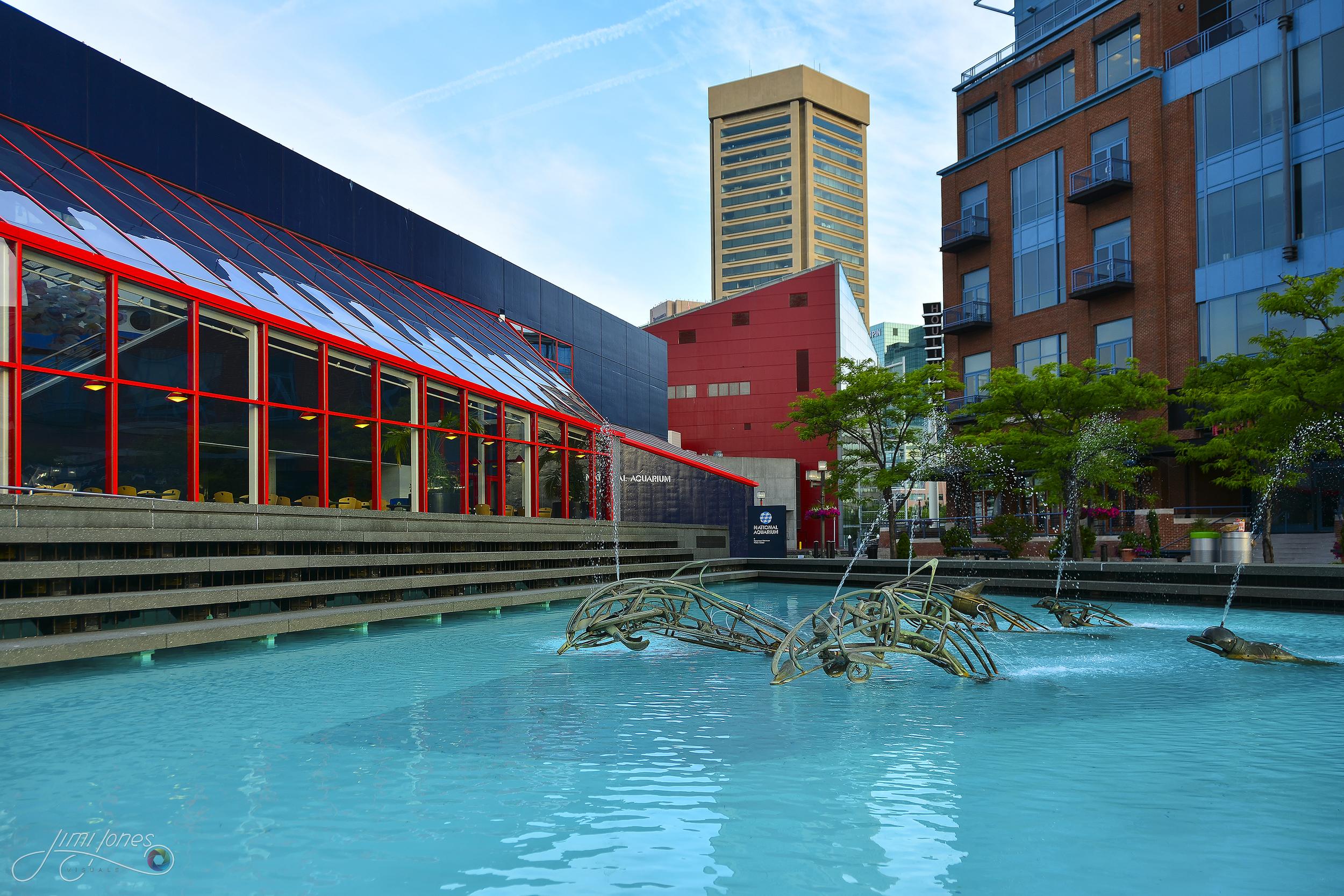 Dolphin Sculptures - National Aquarium Baltimore