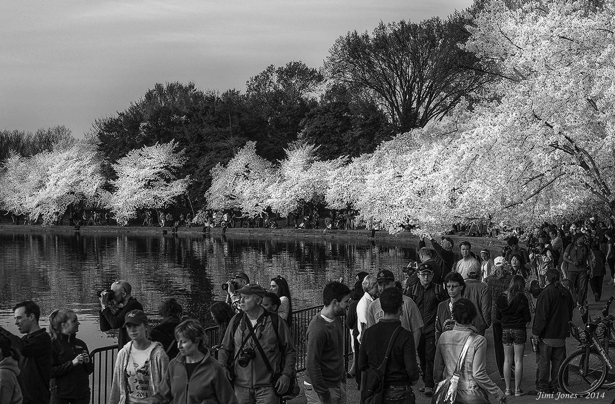 2014 National Cherry Blossom Festival - B&W.jpg