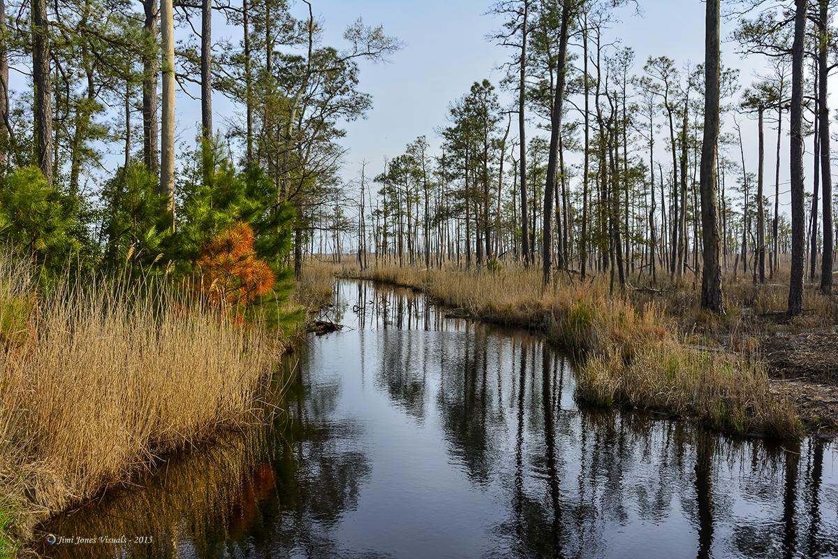 Inside the Blackwater National Wildlife Refuge