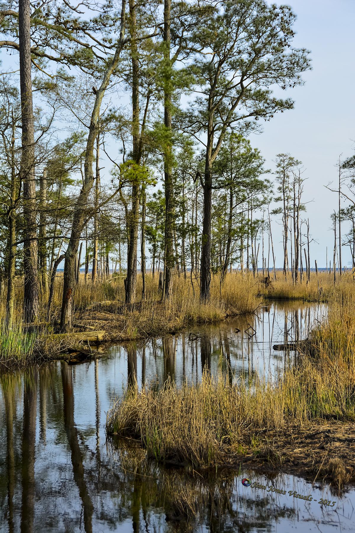 Marshland - Blackwater Wildlife Refuge
