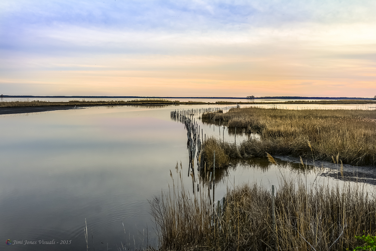 Wild Grasses - Chesapeake Bay