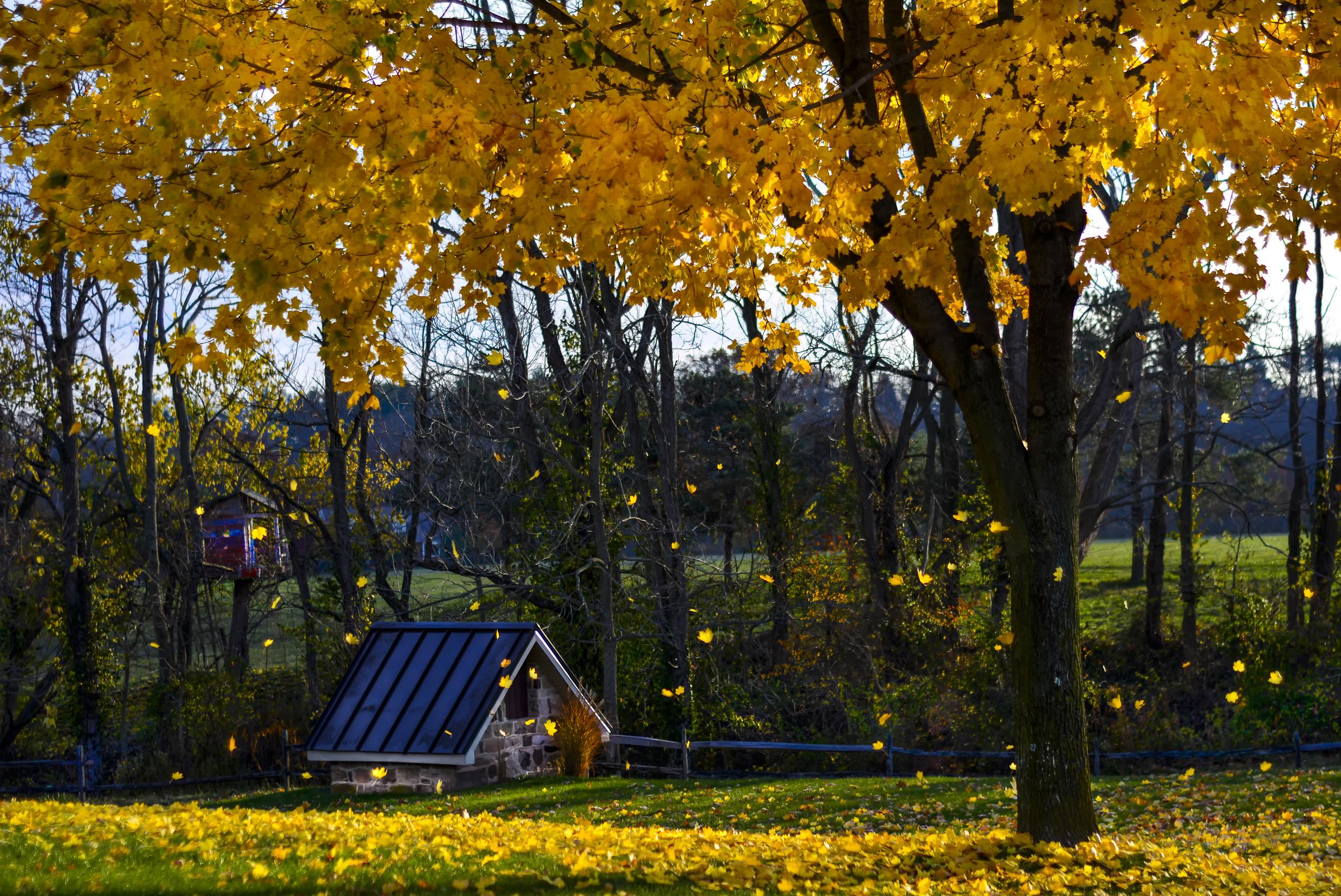 Falling Leaves.jpg