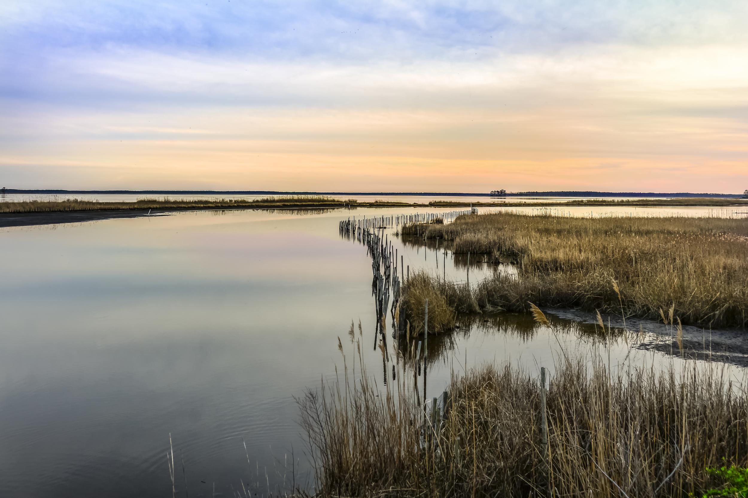 Wild Grass - Chesapeake Bay.jpg