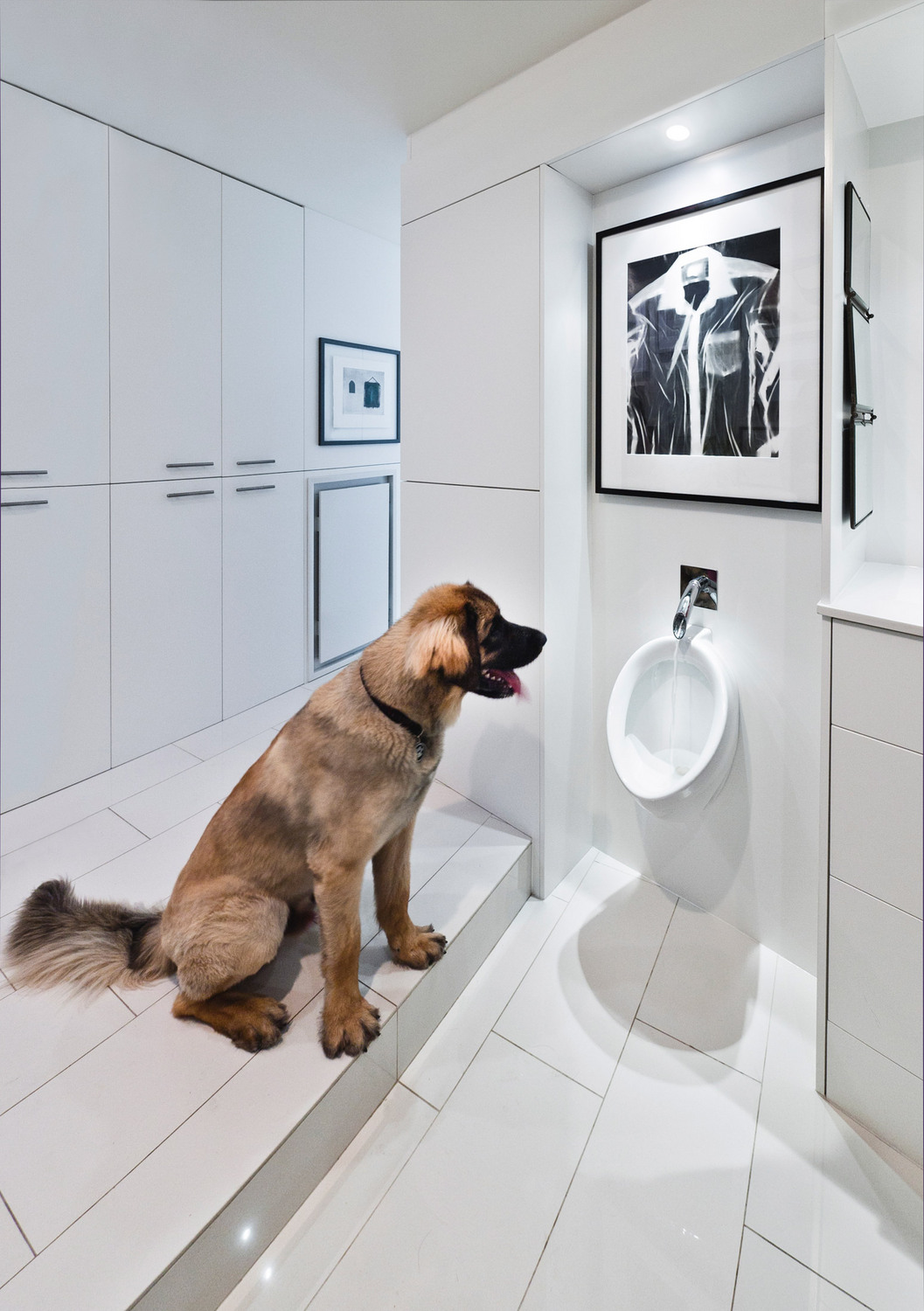 A renovated condo at  324 Laurier Ave  by   Kariouk Associates  featuring dog bowl (repurposed urinal).