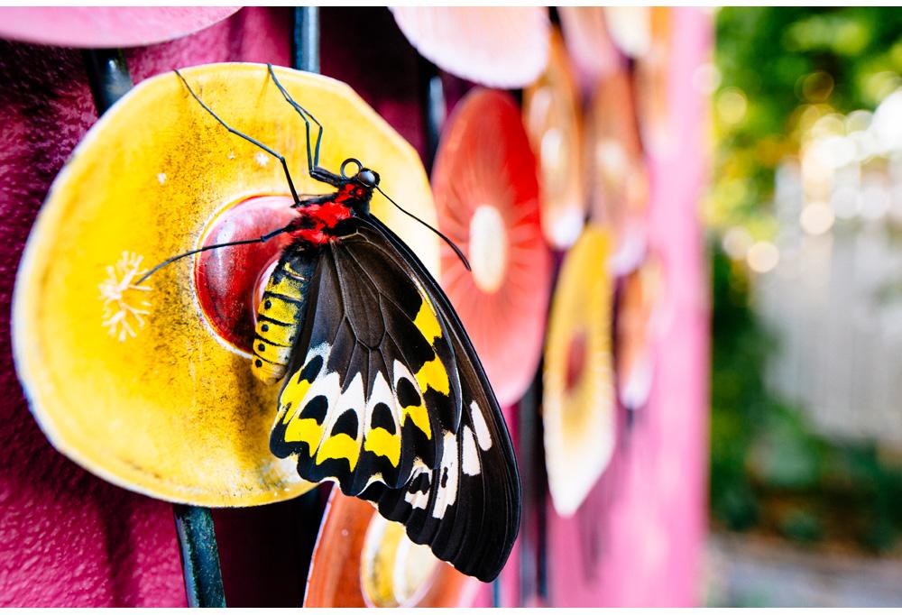001-butterfly.jpg