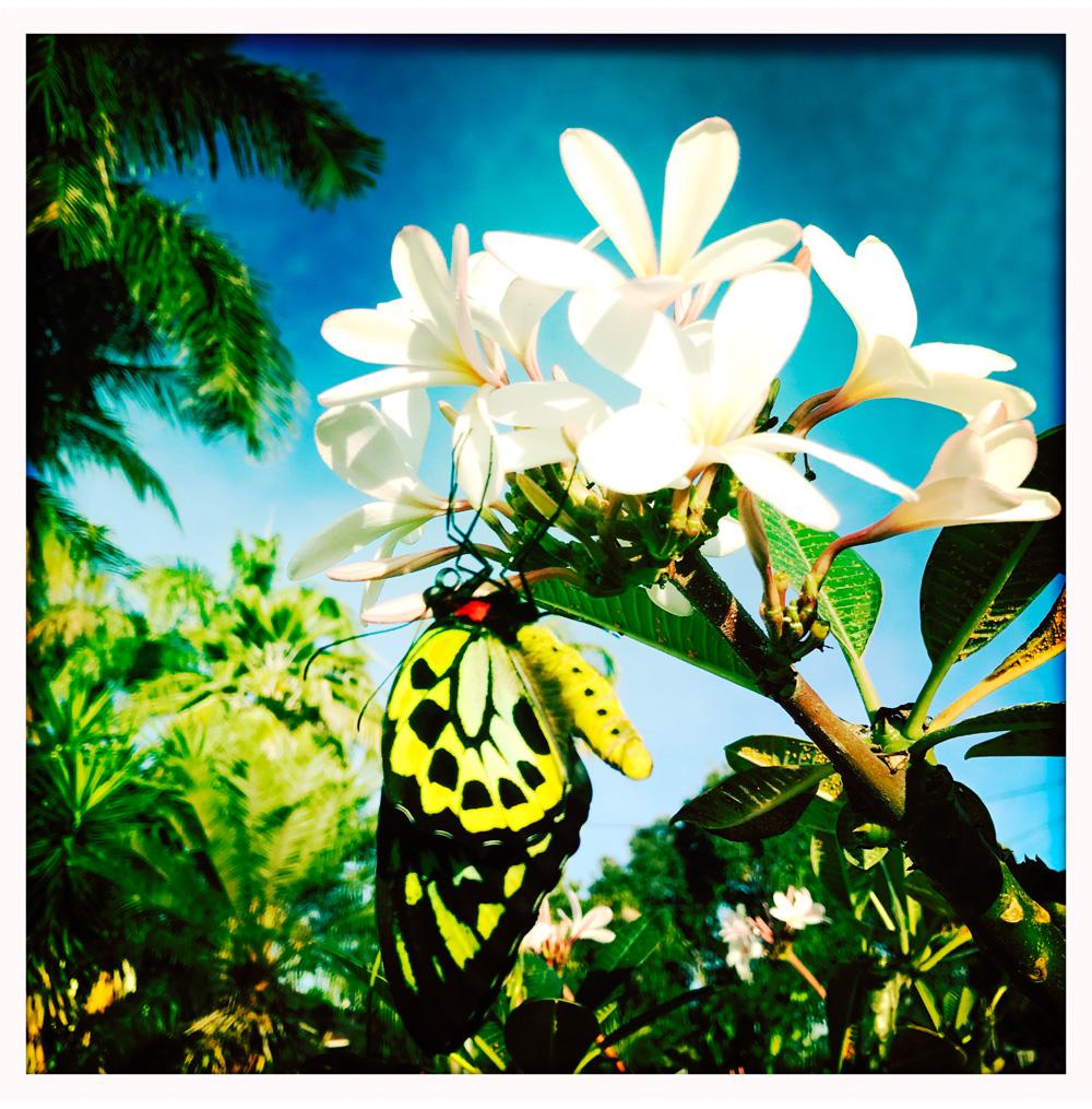 002-butterfly.jpg