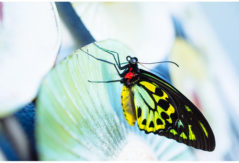005-butterfly.jpg