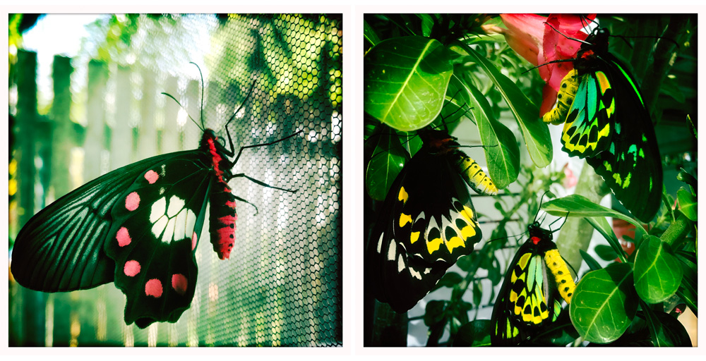 004-butterfly.jpg
