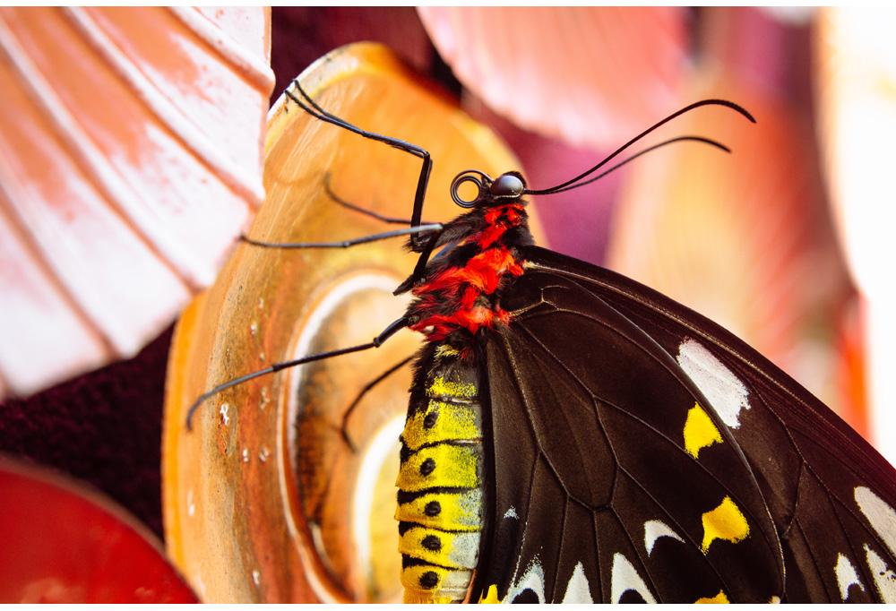 007-butterfly.jpg