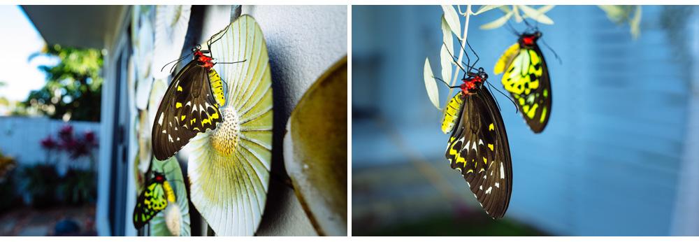 009-butterfly.jpg