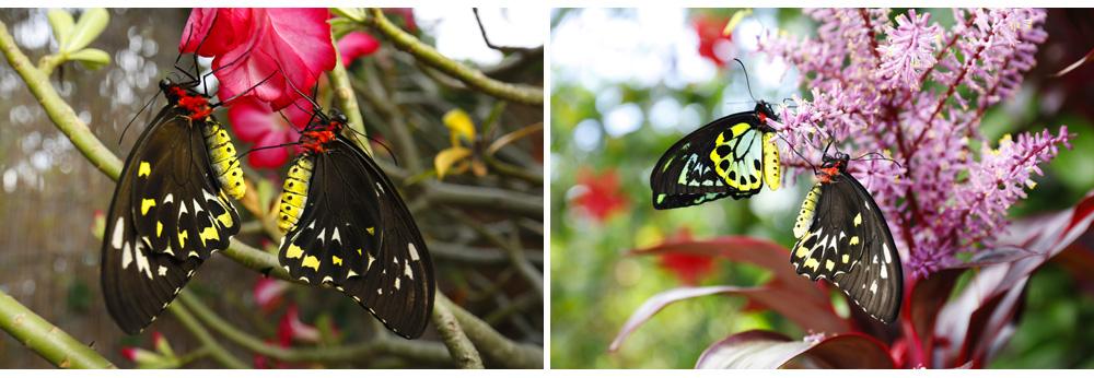 011-butterfly.jpg