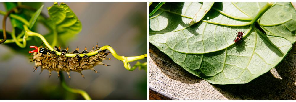 013-butterfly.jpg