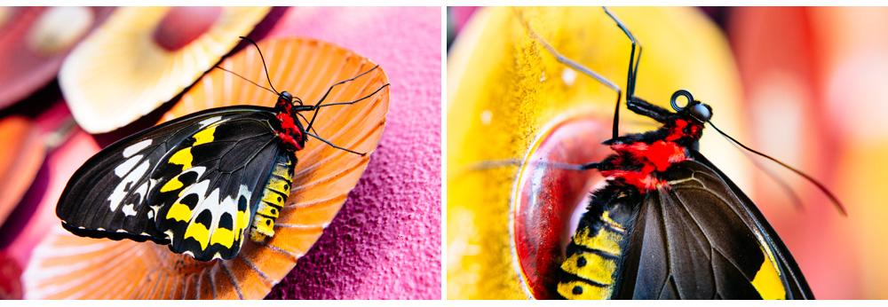 015-butterfly.jpg