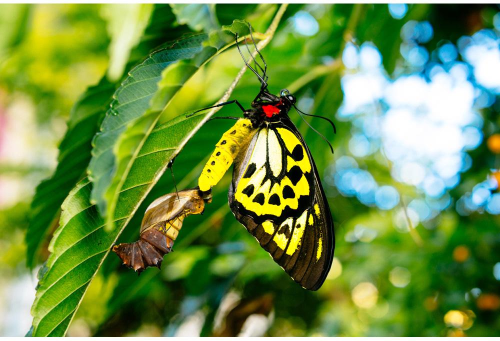 014-butterfly.jpg