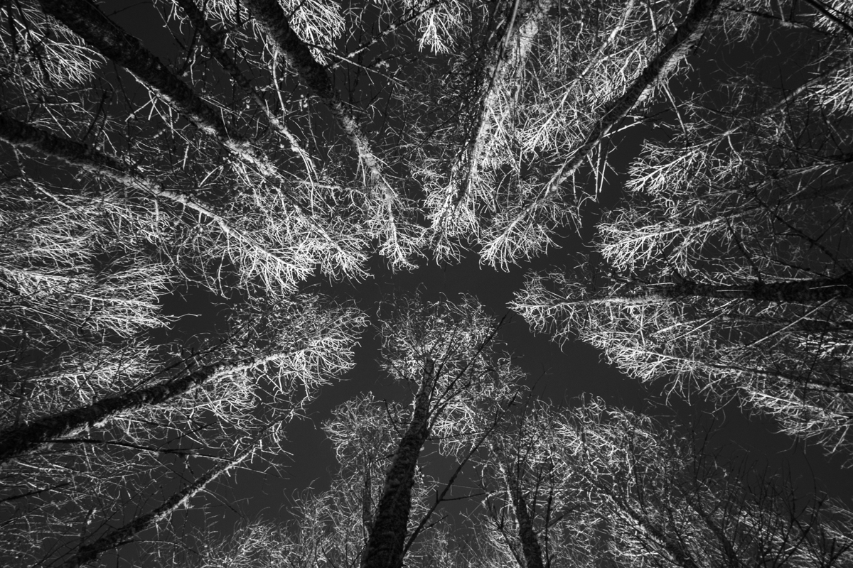 20150114_1141522 © 2014 Erik Hecht.jpg