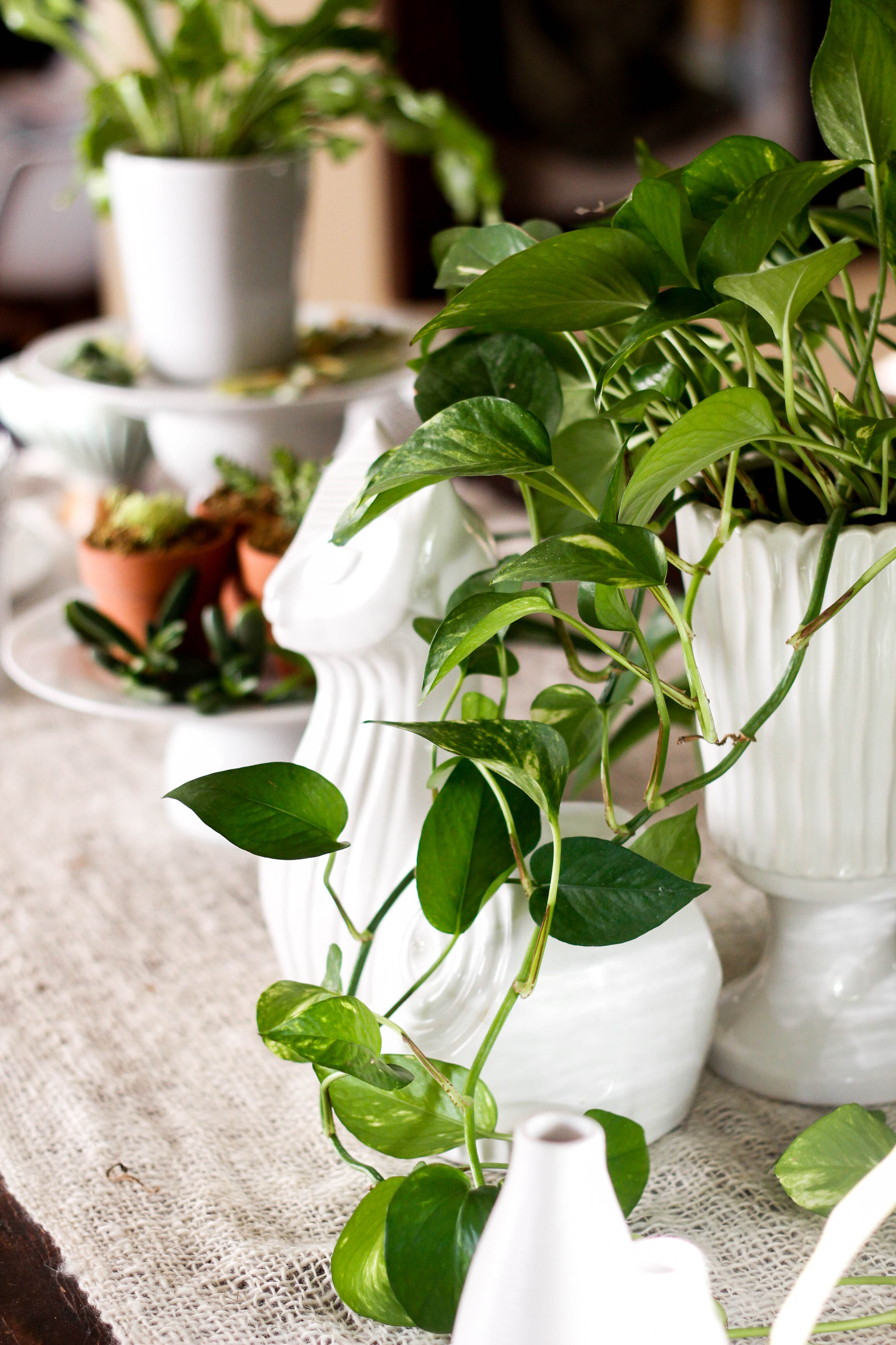 plants and white pots table styling