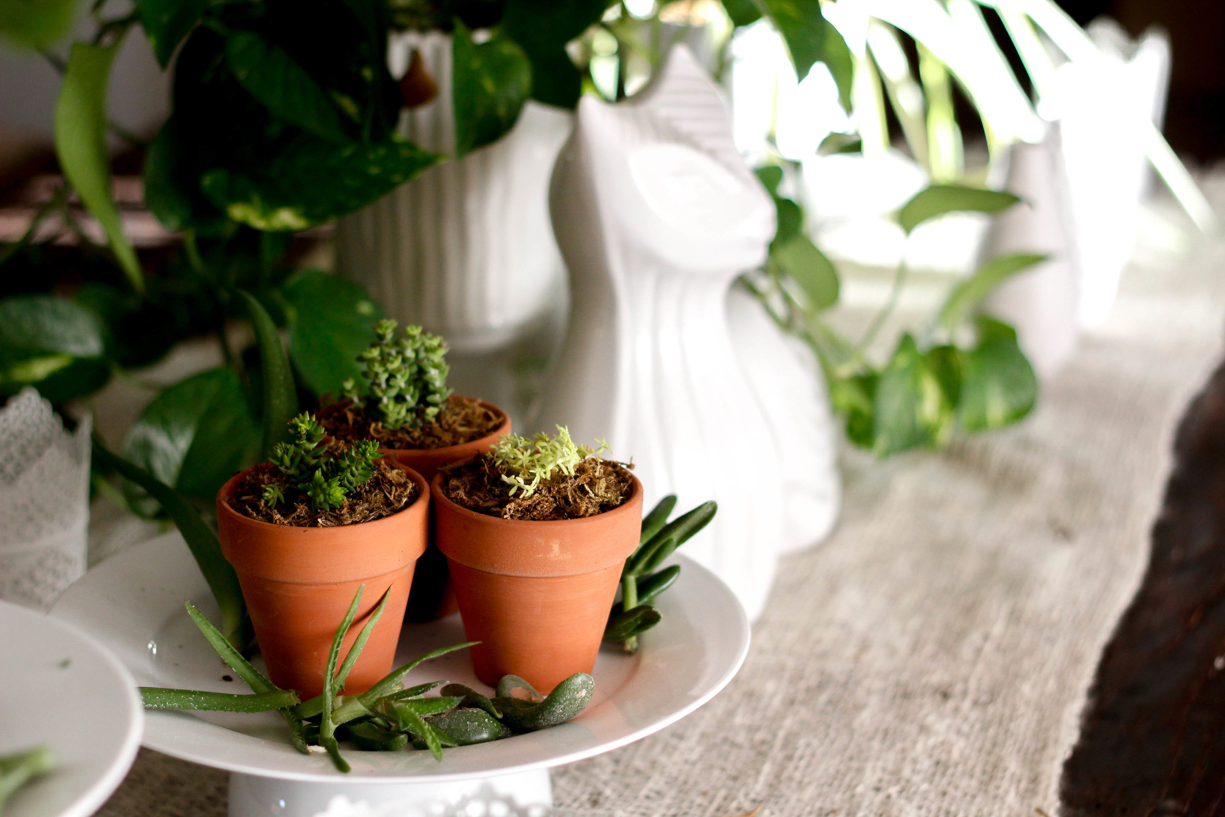 Very Sarie Plant styling