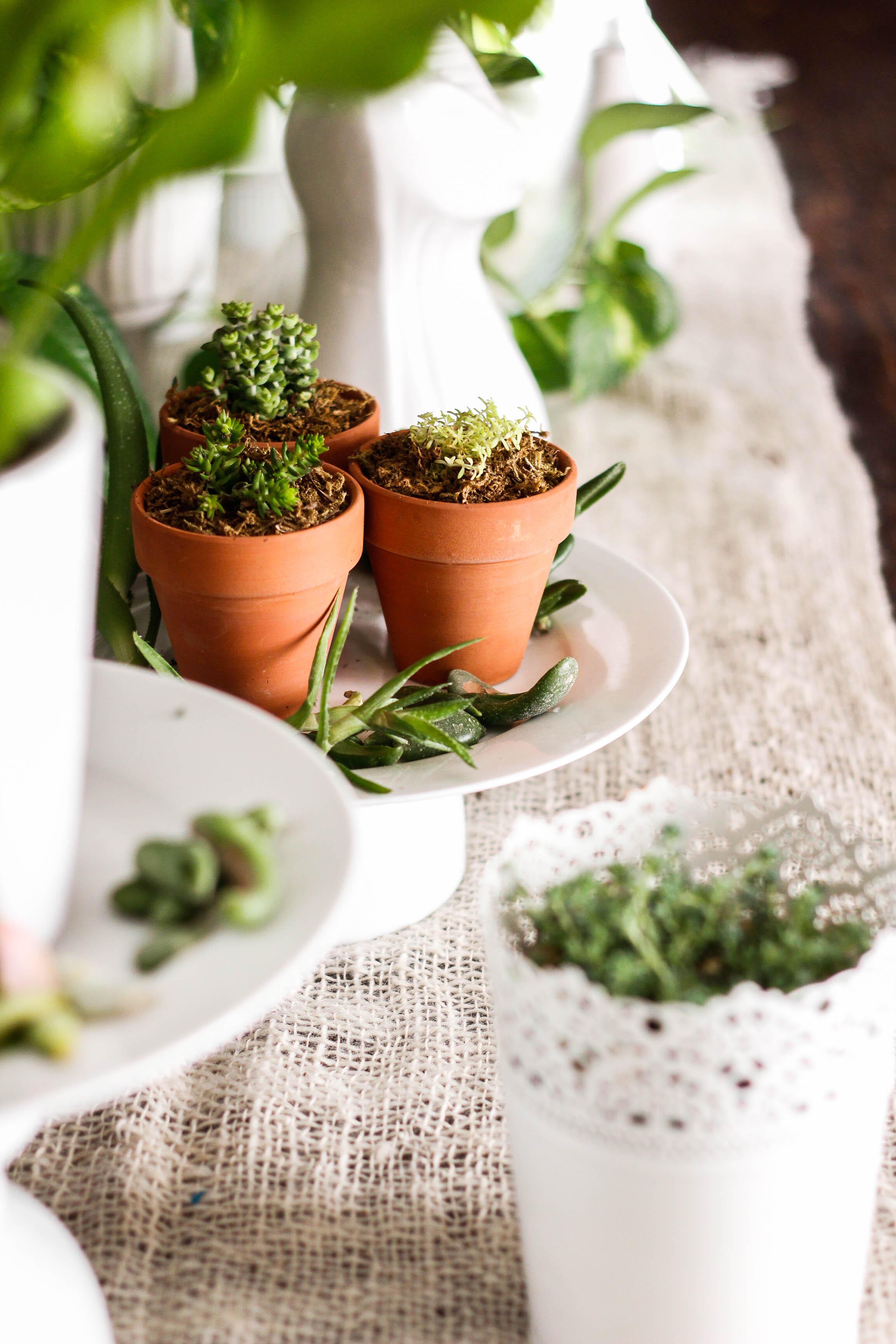 Plants and white pots table setting